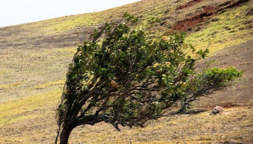 Kona e as marcas dos fortes ventos. Foto: Talita Saab